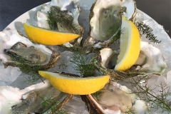 Native colchester oysters